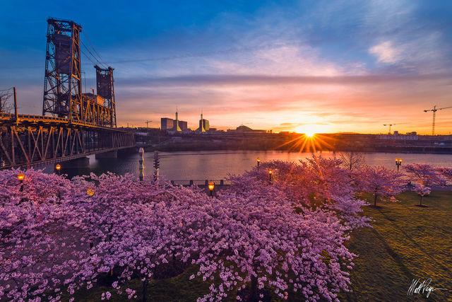 Cherry Blossom, Landscape, Mount Hood, Oregon, Pacific Northwest, Portland, Portland Oregon, Spring, Sunstar, Steel Bridge, Sunrise, Sunstar, Water, waterfront park, willamette river