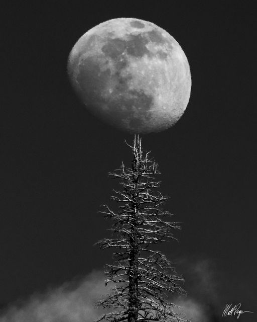 Black and White, Moon, Yosemite National Park, tree