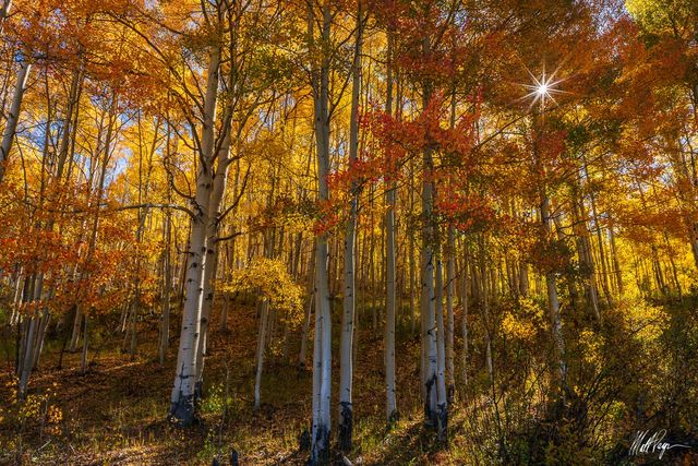 Aspen Trees, Autumn, Colorado, Crested Butte, Fall, Fall Colors, Forest, Gunnison, Landscape, Ohio Pass, Sunrise, Sunstar, Yellow, September