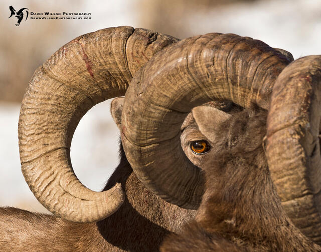 Dawn Wilson - Ethics in Nature Photography