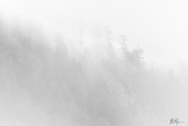 Fog on the California Coast (2021)