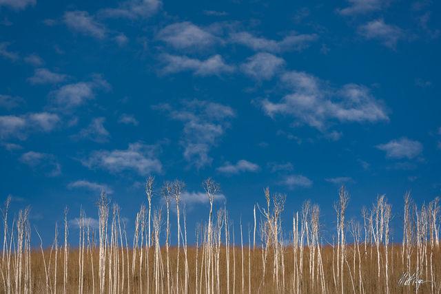 Aspen Trees, Blue skies, Clouds, Colorado, Durango, Landscape, Minimalistic, Missionary Ridge Fire, Winter