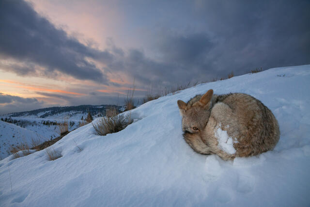 Wildlife Photography, Mountaineering, and Pre-Visualization - A Conversation with Jess Findlay