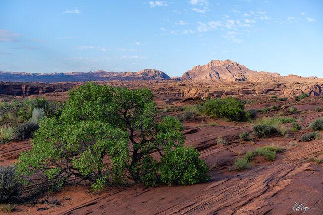 The Desert Provides Life (2020)