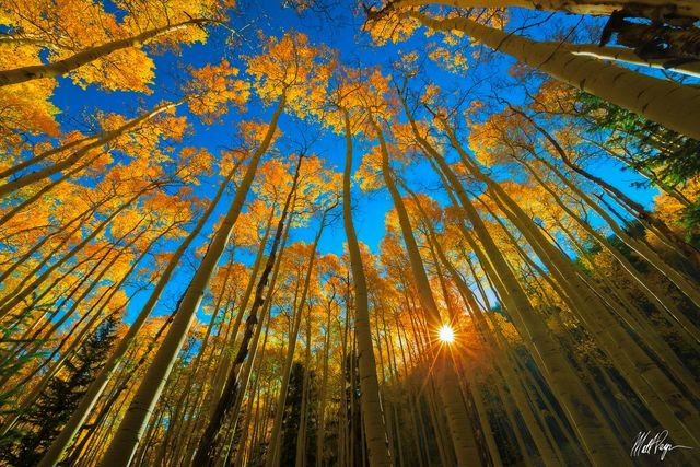 Aspen Trees, Autumn, Colorado, Fall, Mount Princeton, St. Elmo, sunstar, landscape