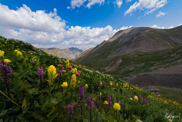 Blue sky, Colorado, Landscape, Mountains, Wildflowers, Handies Peak, American Basin, Jones Mountain