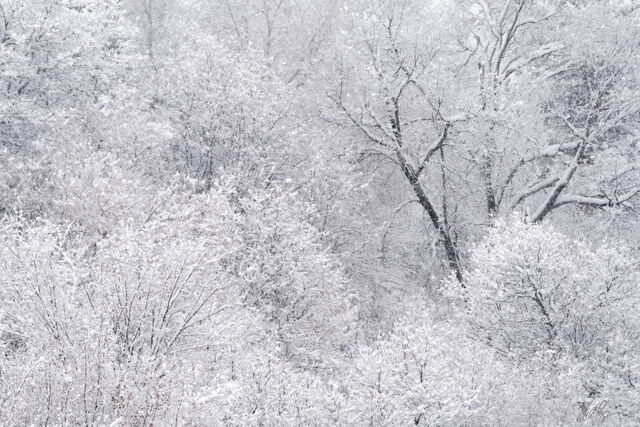 Winter Trees (2021)