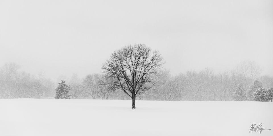 Black and White, Colorado, Landscape, Panorama, Snow, Winter, tree, alone, isolation