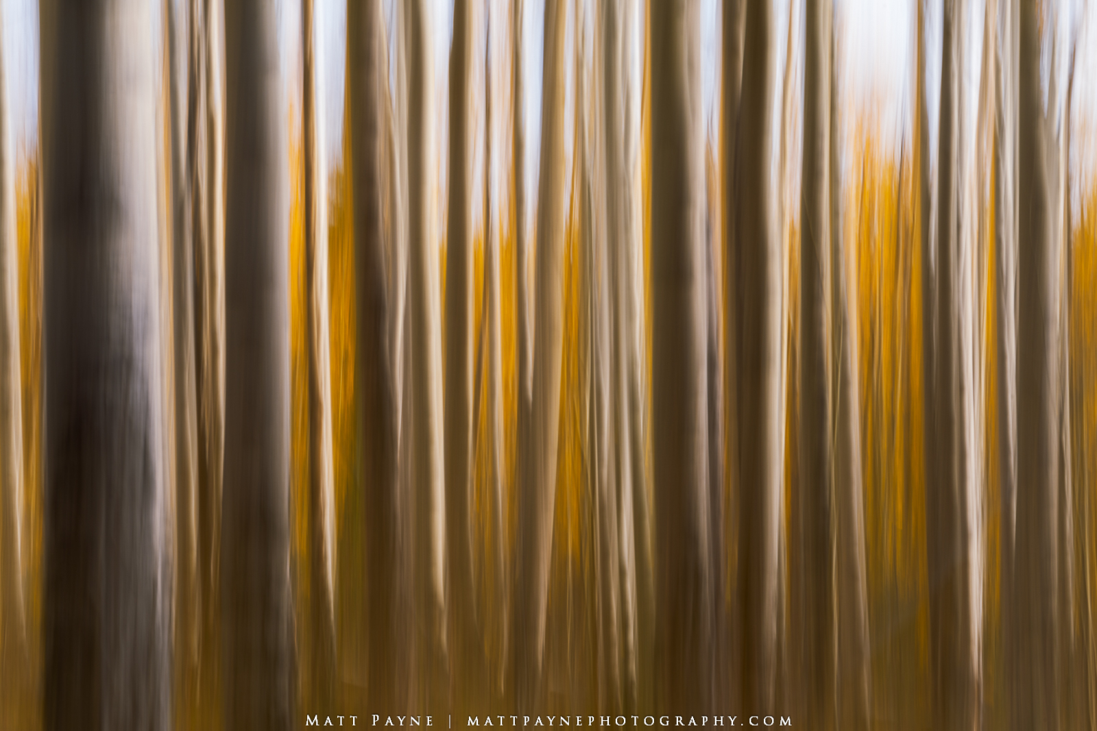 Intentional Camera Movement is not something I have dabbled with much over the years but after trying it out this year I think...