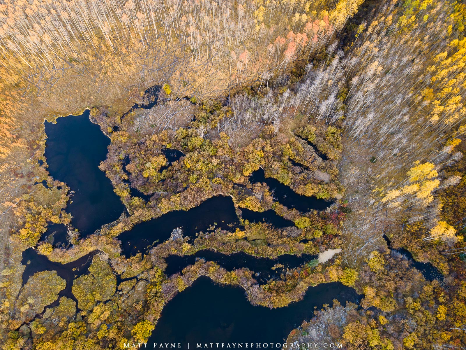 A network of beaver ponds as seen from above in Colorado during fall / autumn. Photo © copyright by Matt Payne.