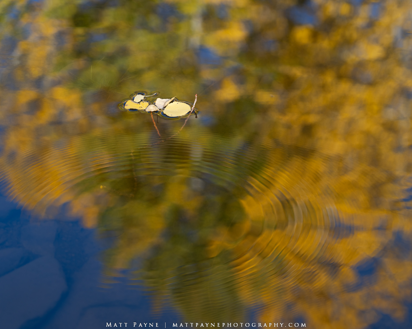 Autumn, Colorado, Fall, Fall Colors, Water, ripples, Landscape Photography, photo