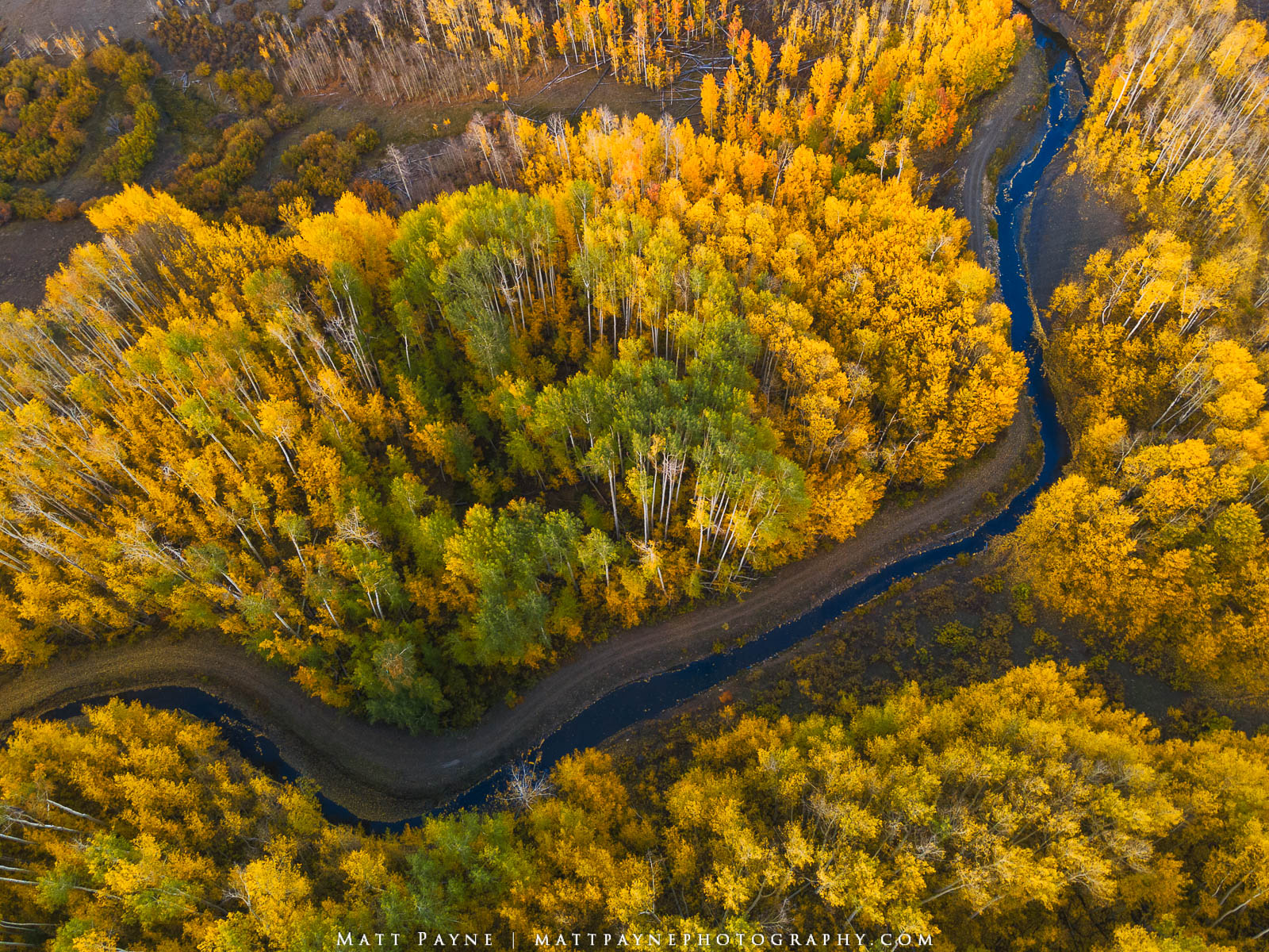 Aspen Trees, Autumn, Colorado, Fall, Mountains, Landscape Photography, photo