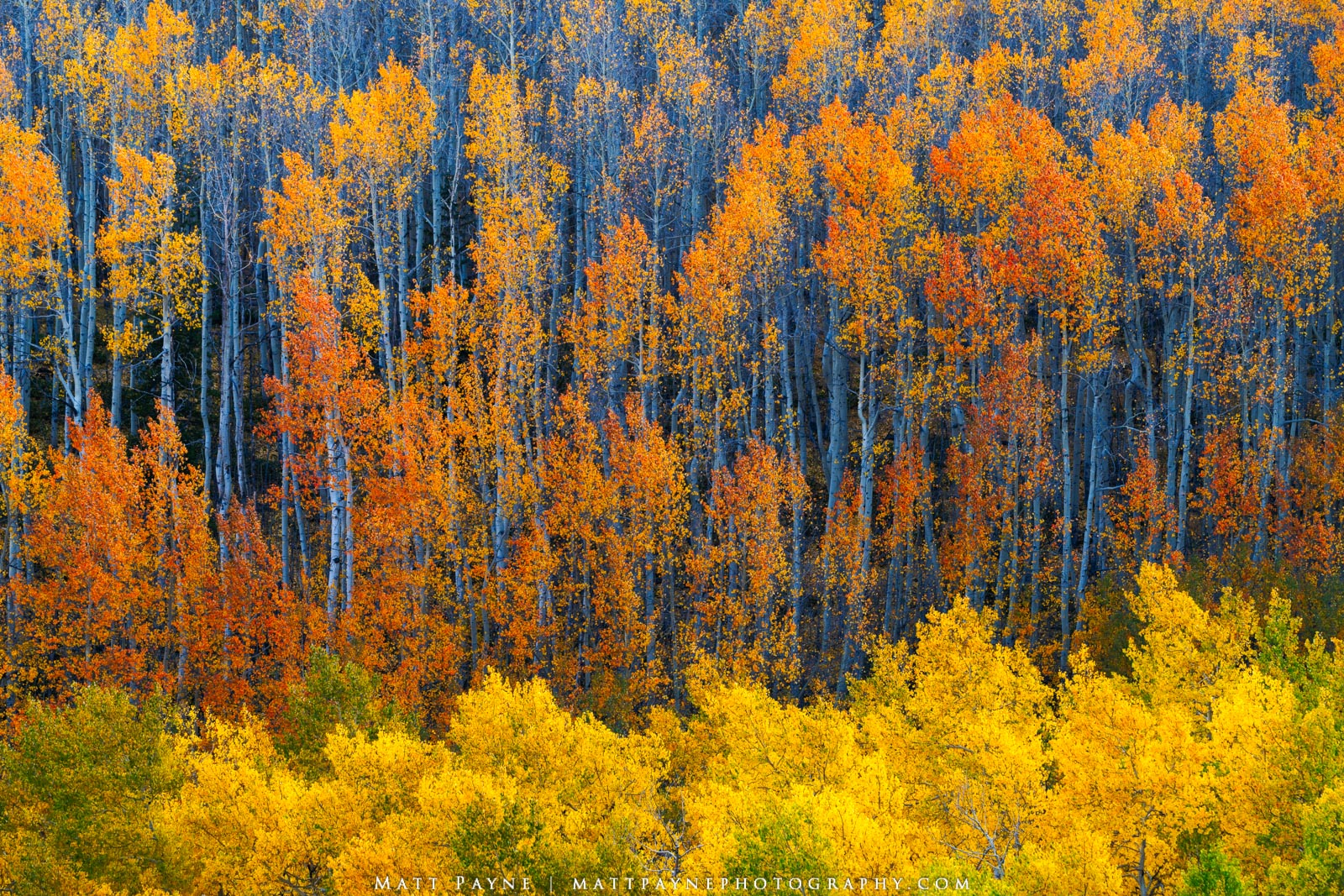 Autumn, Colorado, Fall, Fall Colors, Gold, Green, Landscape, Orange, Red, Yellow, aspen leaves, colorful, landscape photography, layers, photo