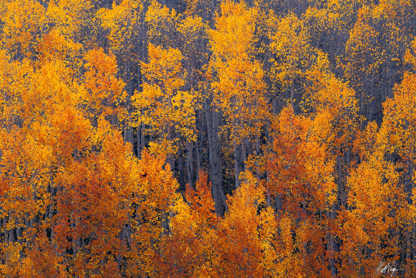 There's nothing more fun than to spend several days in the exact same spot in fall and watch as the leaves change color and blow...