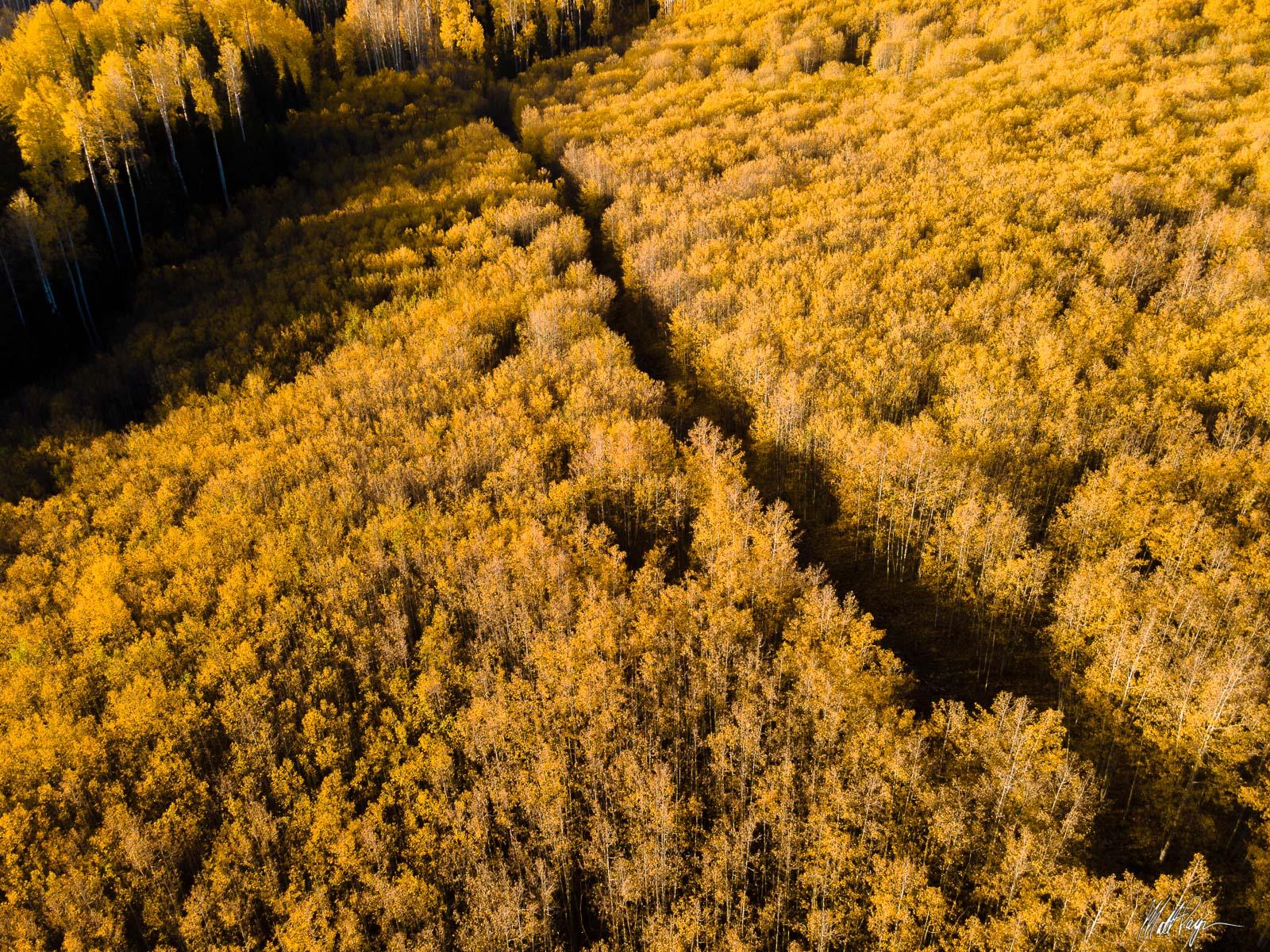 Where will this path take you? Photo © copyright by Matt Payne.