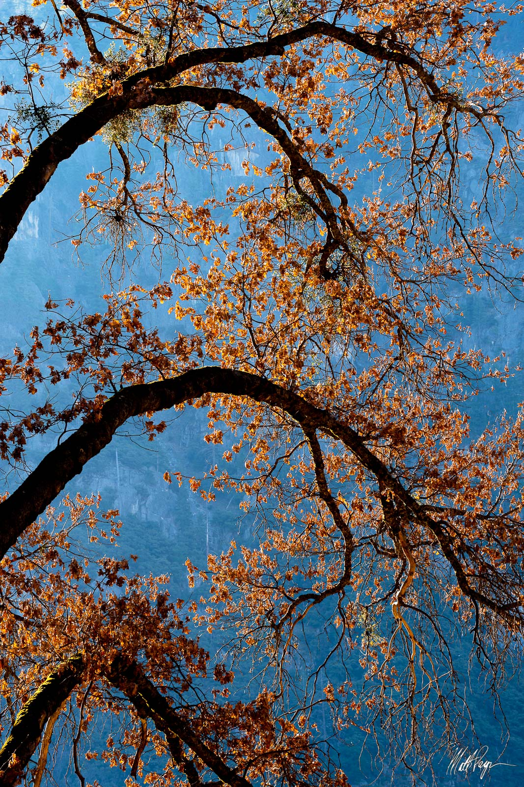 Oak, Sunset, Winter, Yosemite National Park, branches, photo