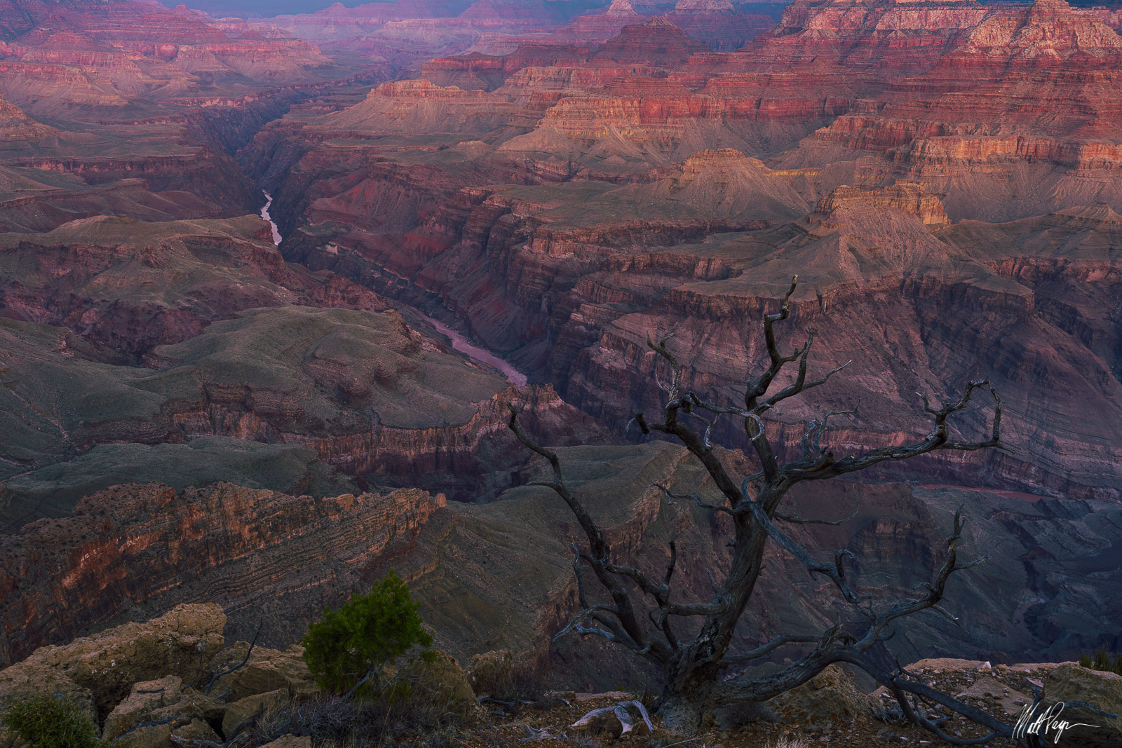A withered old tree stands guard above the Grand Canyon and the Colorado River at sunrise. The Grand Canyon National Park holds...