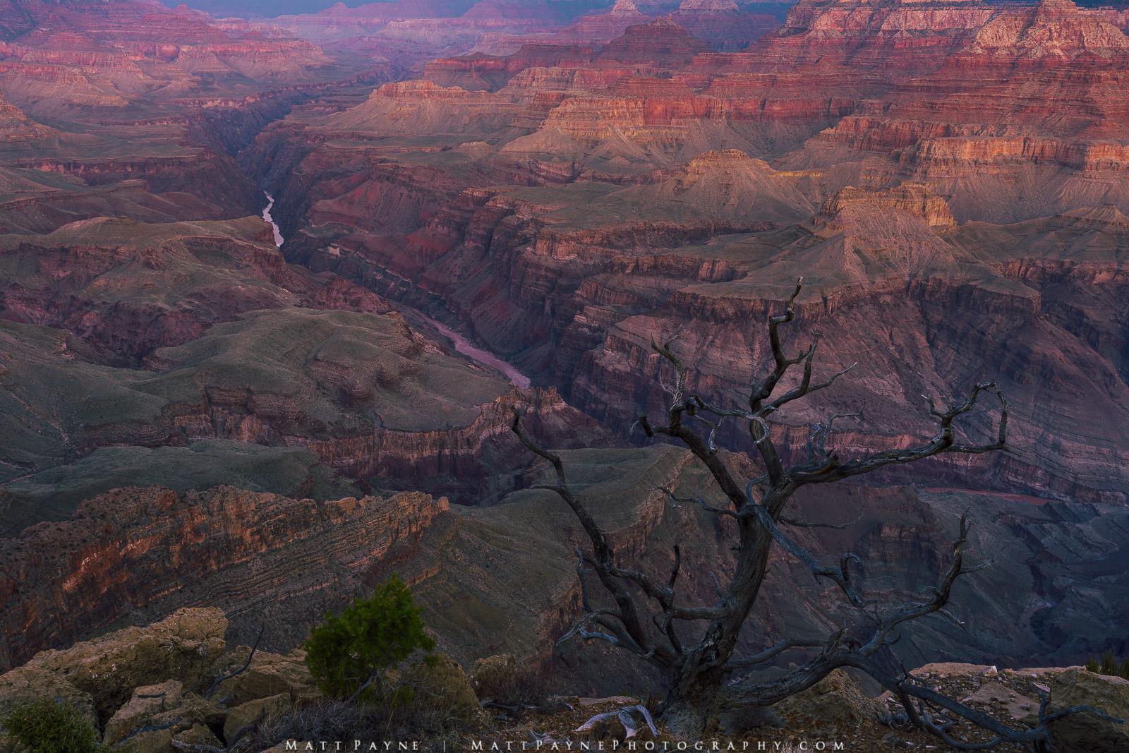 Arizona, Colorado River, Grand Canyon National Park, Grand Scenic, Grand Vista, Landscape, Sunrise, desert, tree, photo