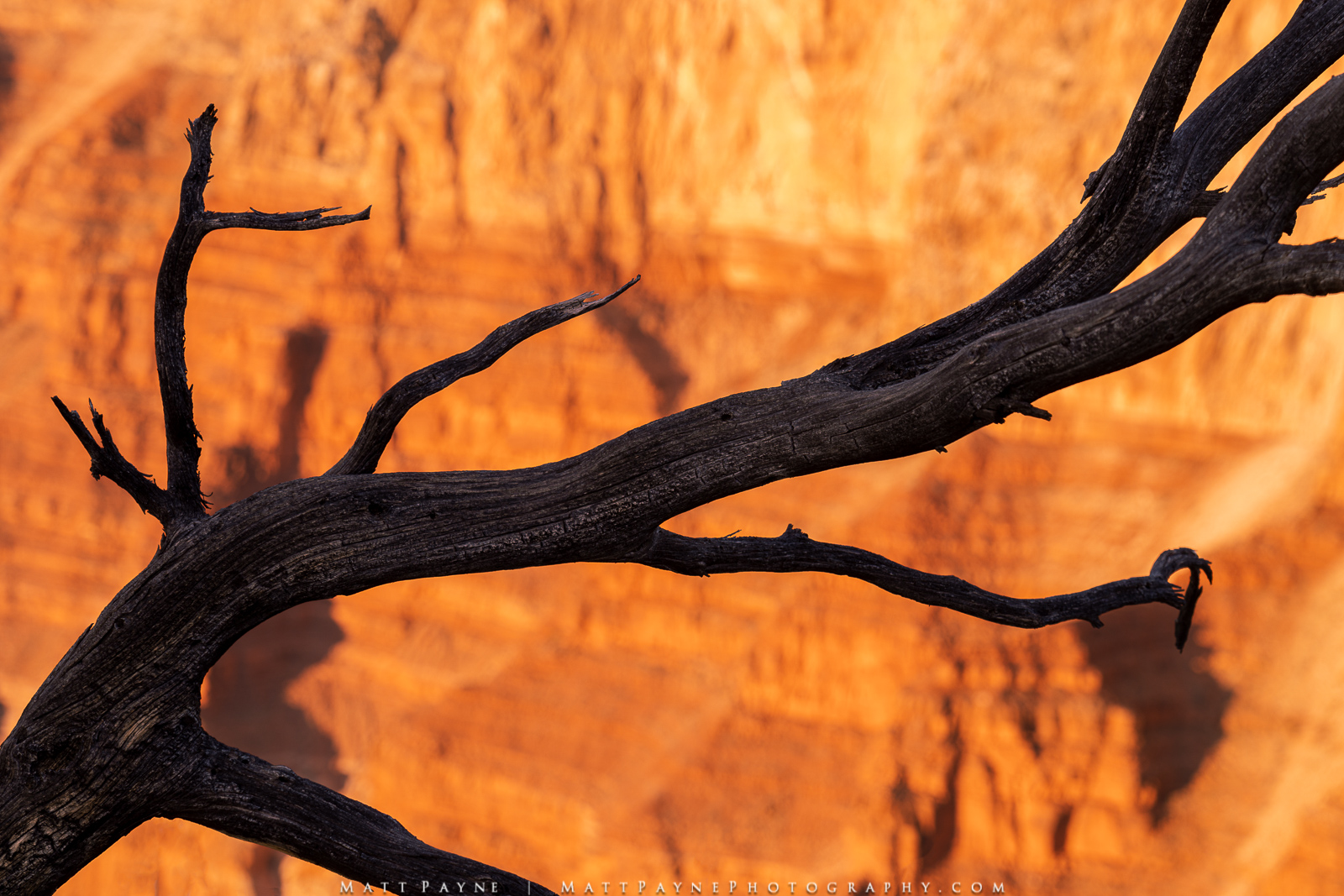A dead branch cuts through an overwise grand view of a massive cliff wall lit up by the last light of day at sunset in the Grand...
