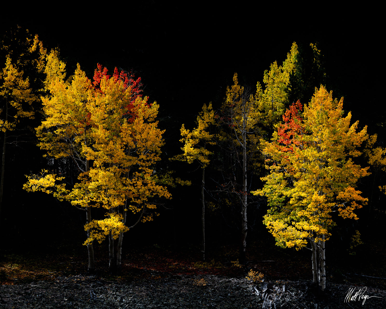 Aspen Trees, Autumn, Colorado, Crested Butte, Fall, Fall Colors, morning, West Elk Mountains, photo