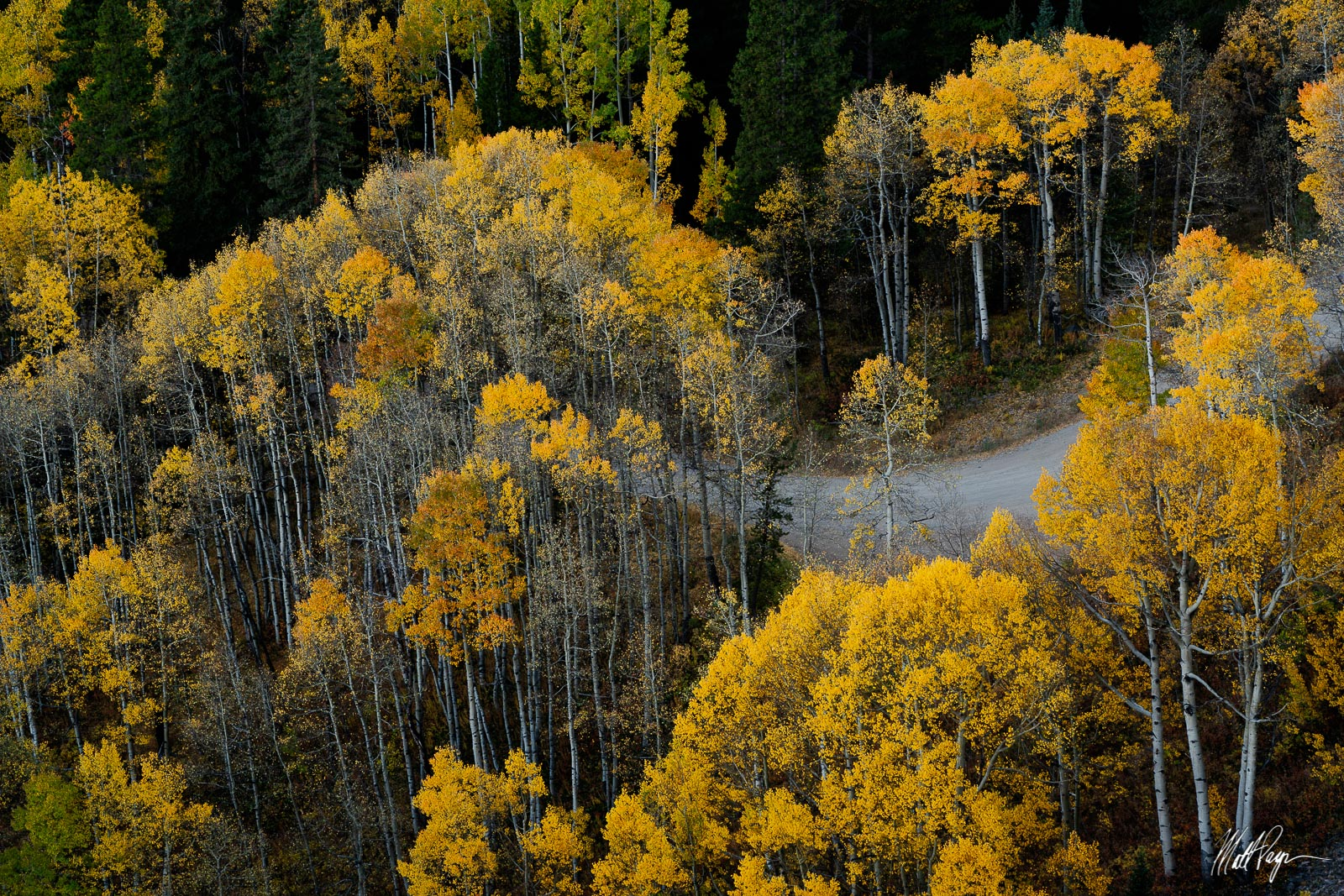 Aspen Trees, Autumn, Colorado, Country Road, Crested Butte, road, photo