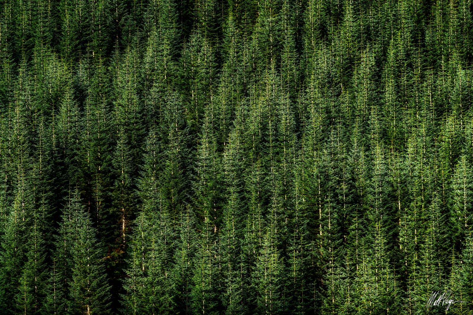 This abstract nature landscape photograph featureshuge stands of Douglas Fir trees around Mt. St. Helens. I was quite blown...