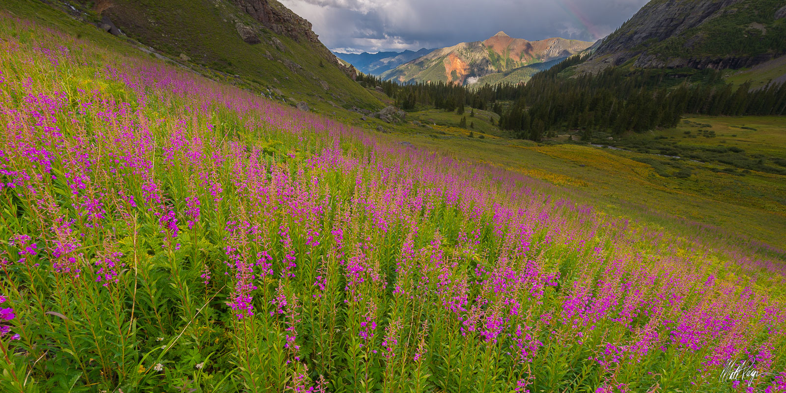 This field of Fireweed wildflowers in lower Ice Lake Basin caught my eye at sunset on a stormy summer afternoon in the San Juan...