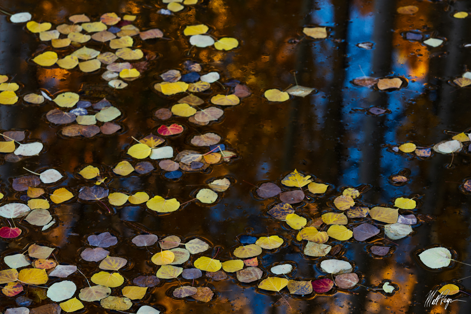Aspen Tree, Autumn, Colorado, Fall, Fall Colors, Landscape, Leaves, Reflection, Water, abstract, photo