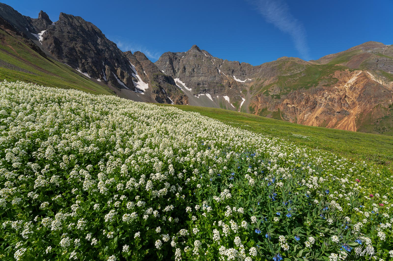 This huge cluster of Heartleaf Bittercress wildflowers was quite impressive to find and photograph beneath Storm Peak near Silverton...