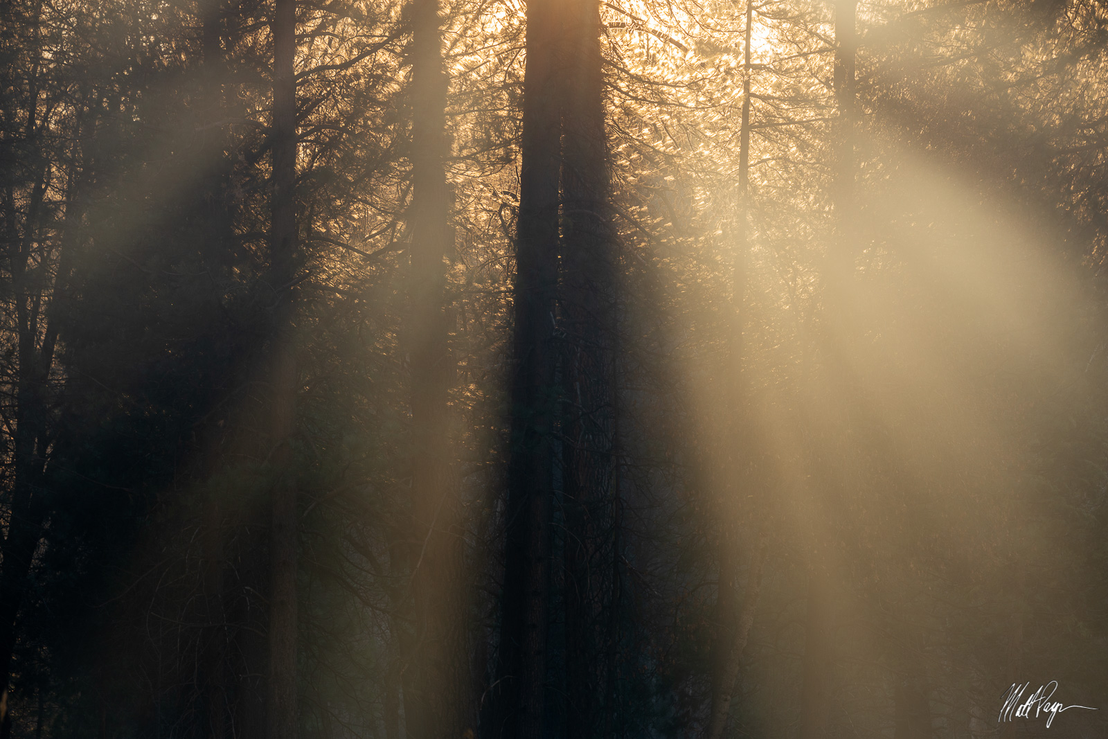 Yosemite National Park, trees, photo