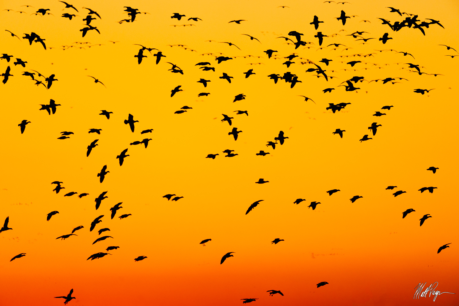Birds, California, Sunset, photo