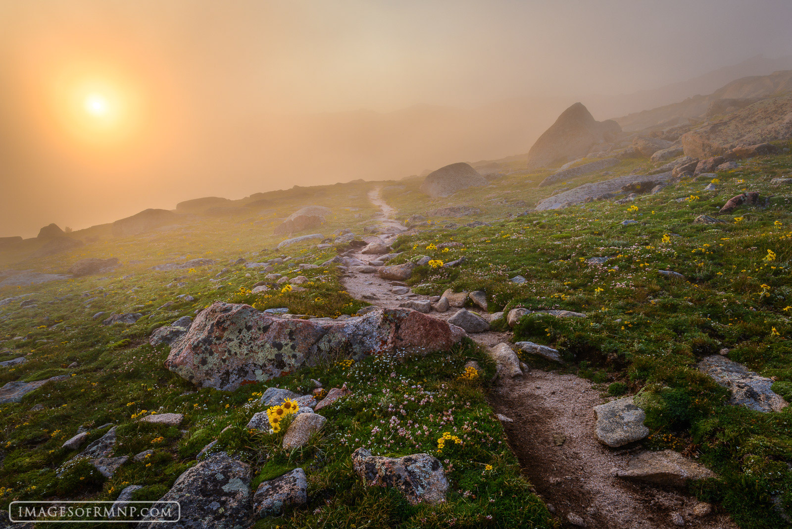 2014, Colorado, USA, alpine sunflower, america, flower, fog, footway, july, man-made, old man of the mountain, path, plant, rmnp, rocky, rocky mountain national park, rydbergia, summer, sun, trail, tu, photo