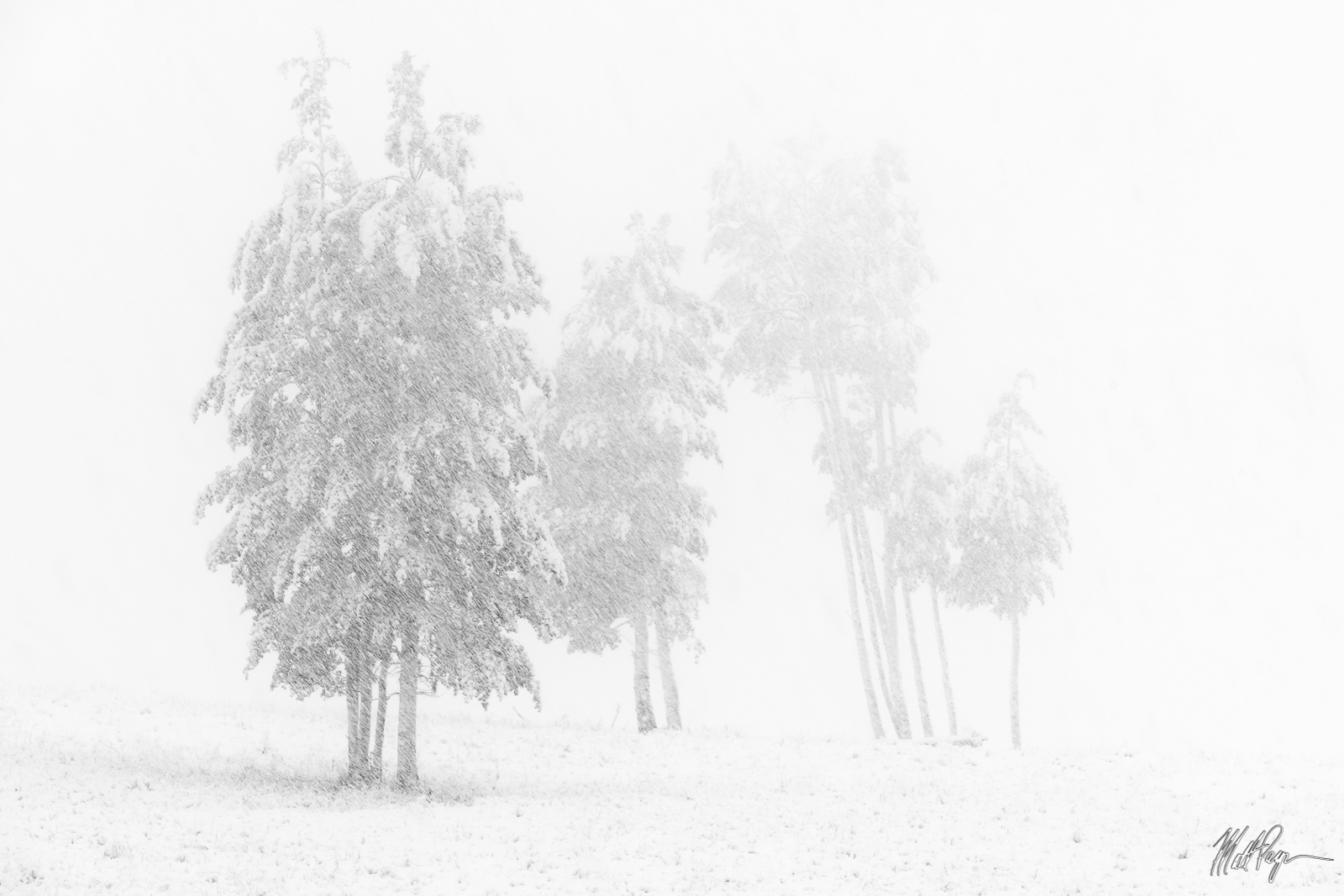 Autumn, Black and White, Colorado, Fall, Fall Colors, Landscape, Snow, storm, trees, Gunnison National Forest, isolation, photo