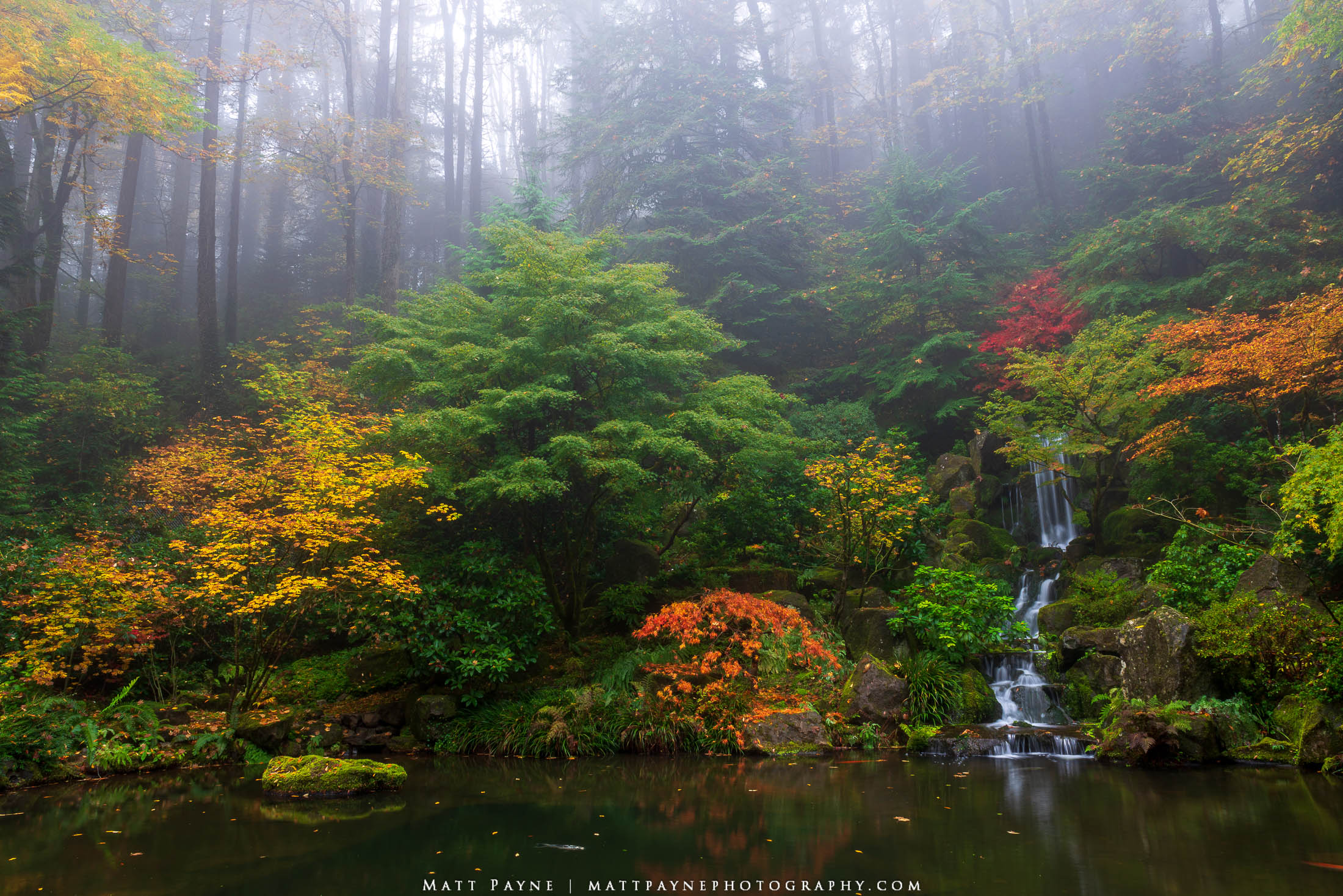 A waterfall at the Portland Japanese Gardens in autumn with fall colors on the foliage.  Photo © copyright by Matt Payne.