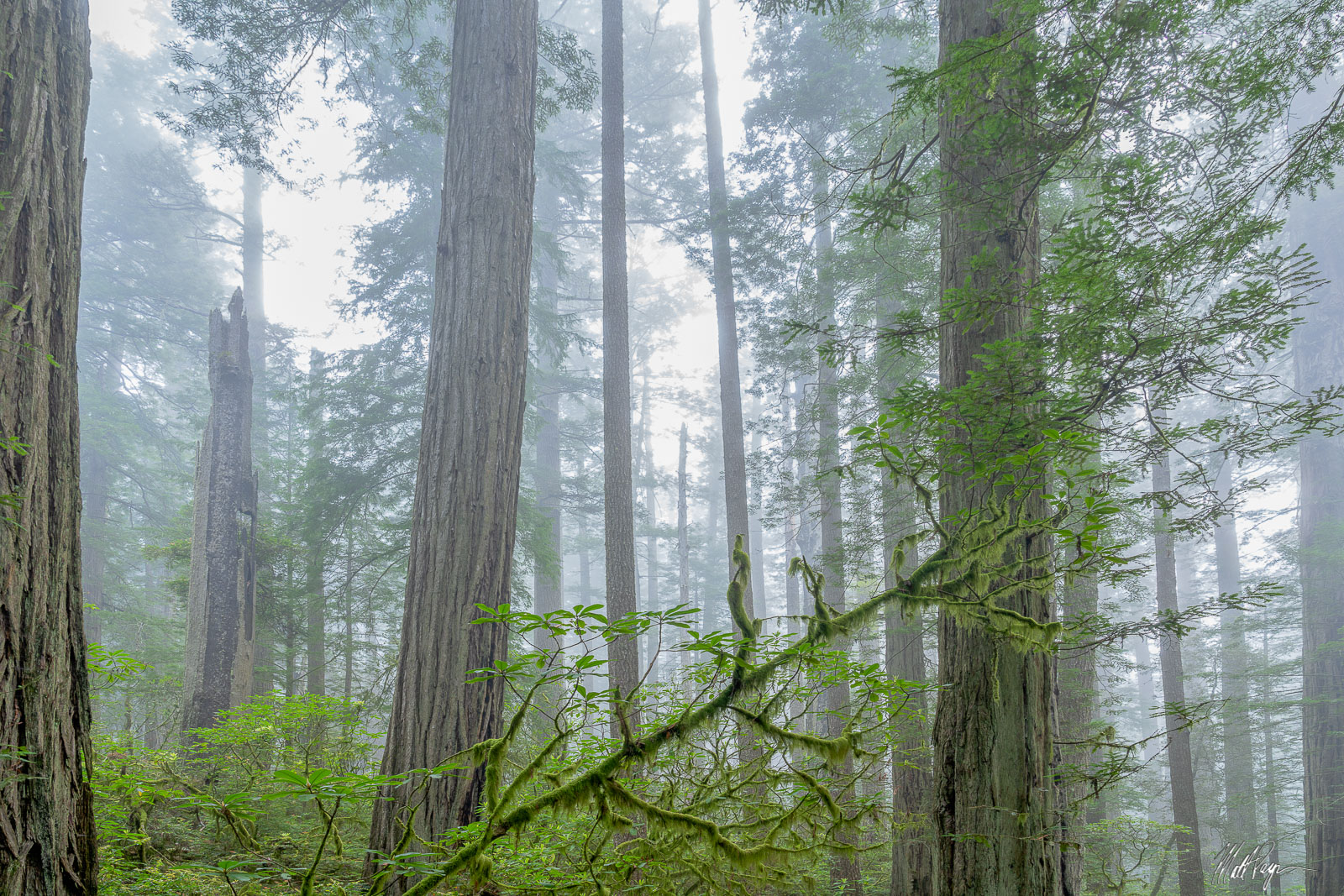 On a recent trip to the Redwoods Forests of California, my friend Kane and I spent countless days wandering the woods to find...