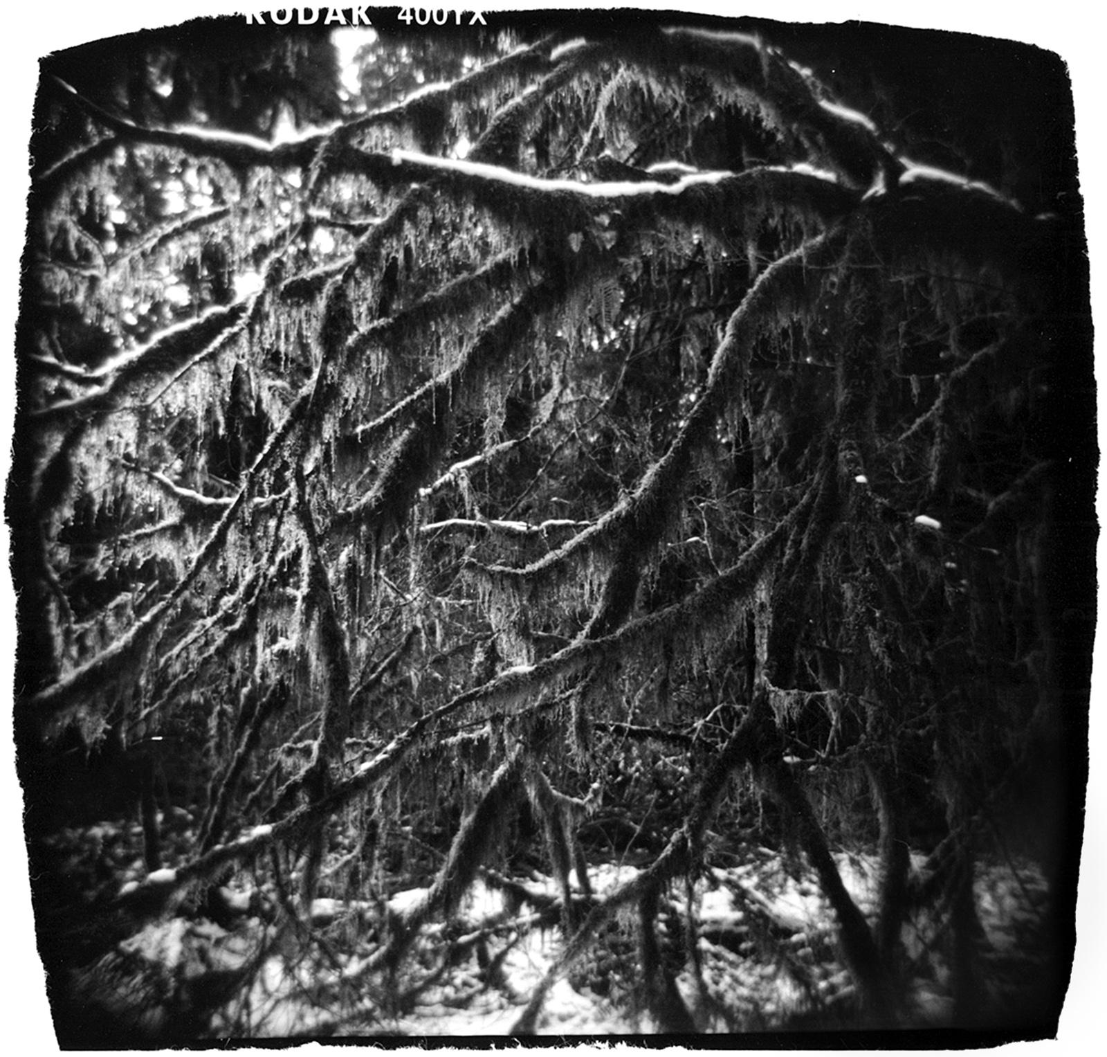 Hoh Rainforest in Snow 2008