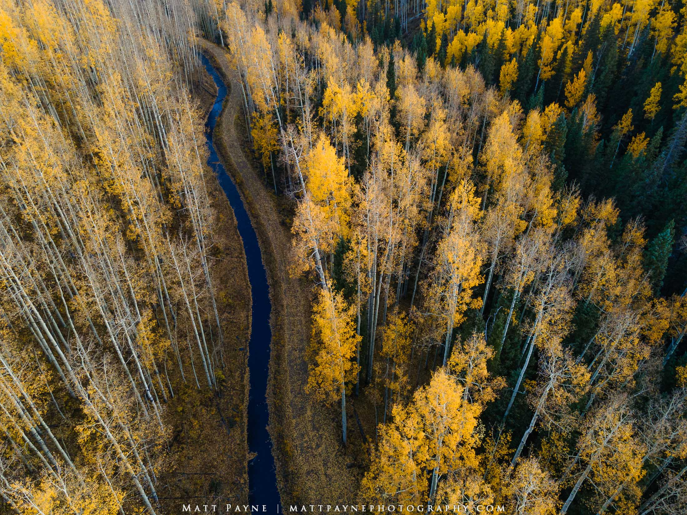A cattle ditch meanders through vibrant autumn aspen trees in Southwest Colorado. Photo © copyright by Matt Payne.