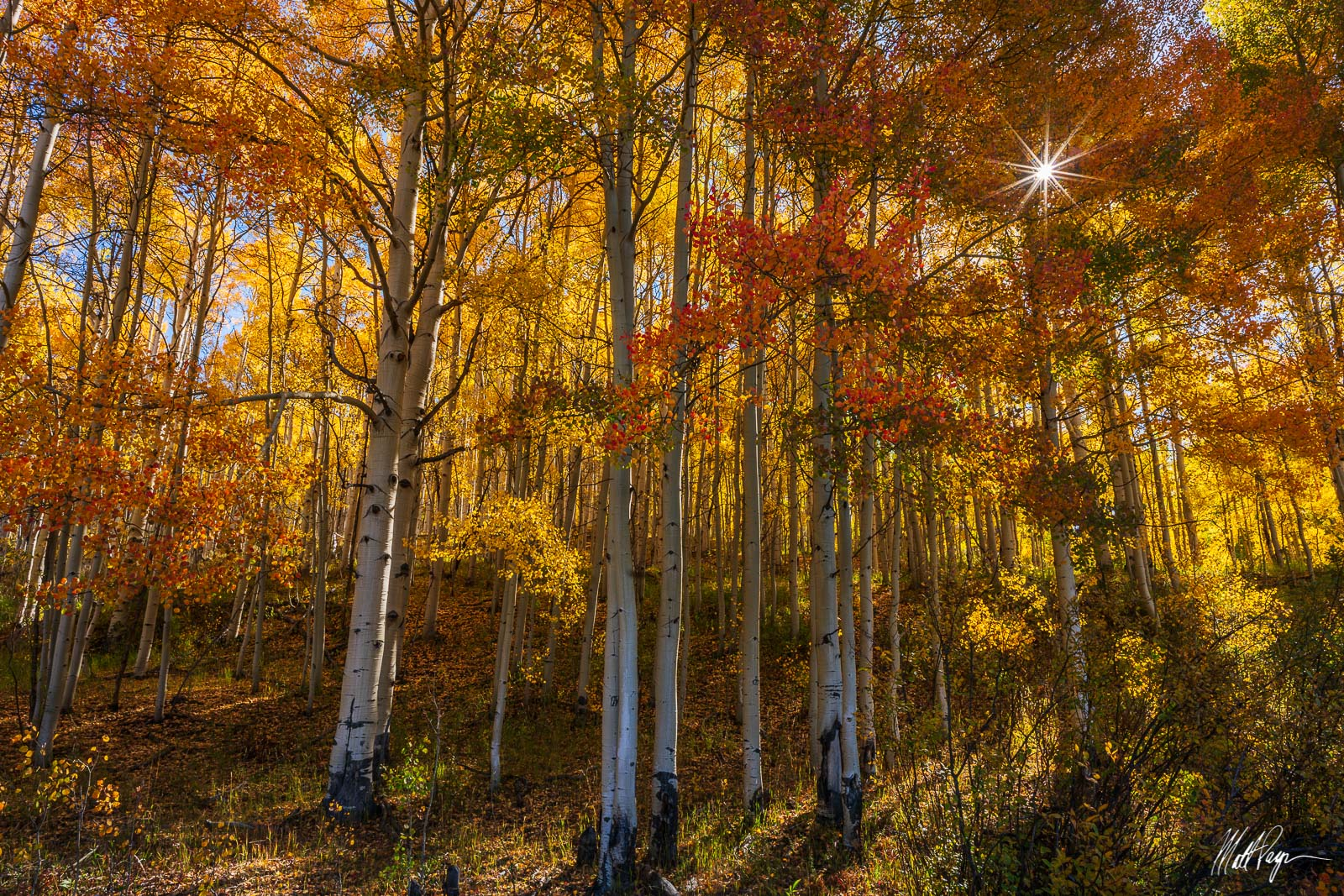 Aspen Trees, Autumn, Colorado, Crested Butte, Fall, Fall Colors, Forest, Gunnison, Landscape, Ohio Pass, Sunrise, Sunstar, Yellow, September, photo