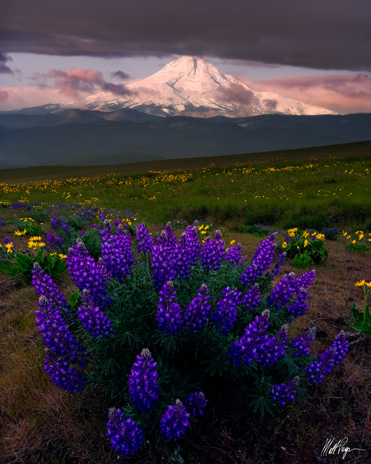 Lupine, Mount Hood, Wildflowers, Columbia River Gorge, Dalles Mountain Ranch, Pacific Northwest, Washington, The Dalles, photo