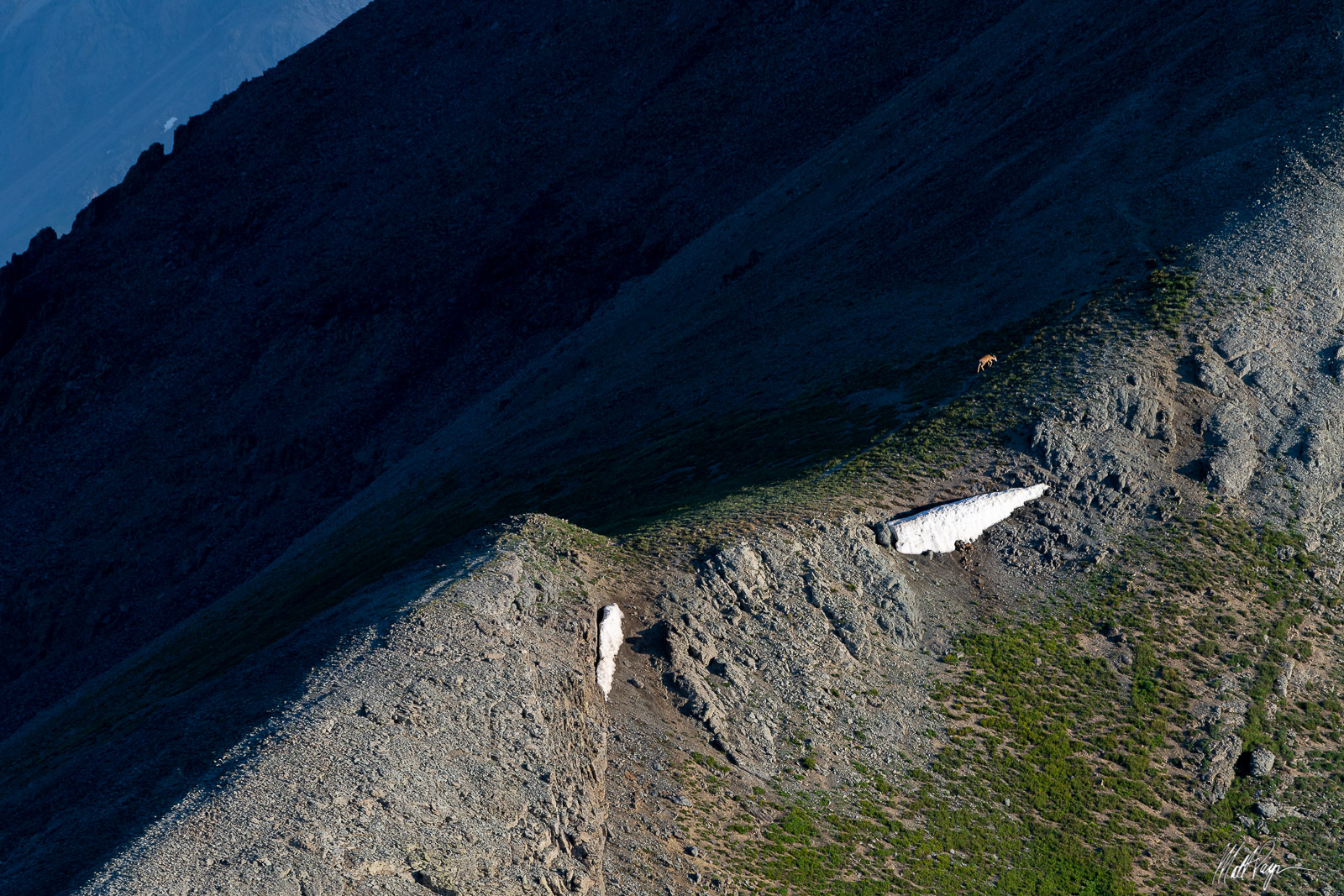 As I was climbing a mountain near Silverton, Colorado, I spotted a deer high above treeline climbing a nearby peak on its own...