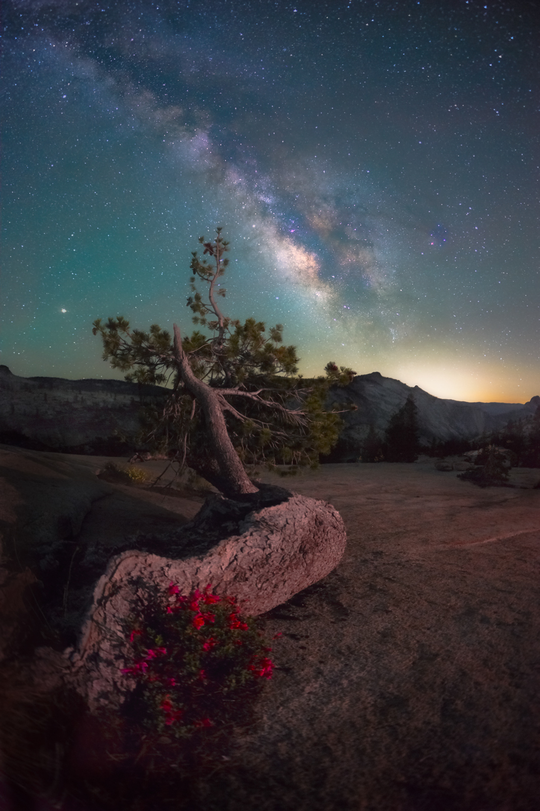 Bonsai, Half Dome, Jeffrey, Olmsted Point, Penstemon, Penstemon newberryi, Pine, Pinus jeffreyi, Pride, Yosemite, milky way, mountain, rock, tree, wildflower, photo