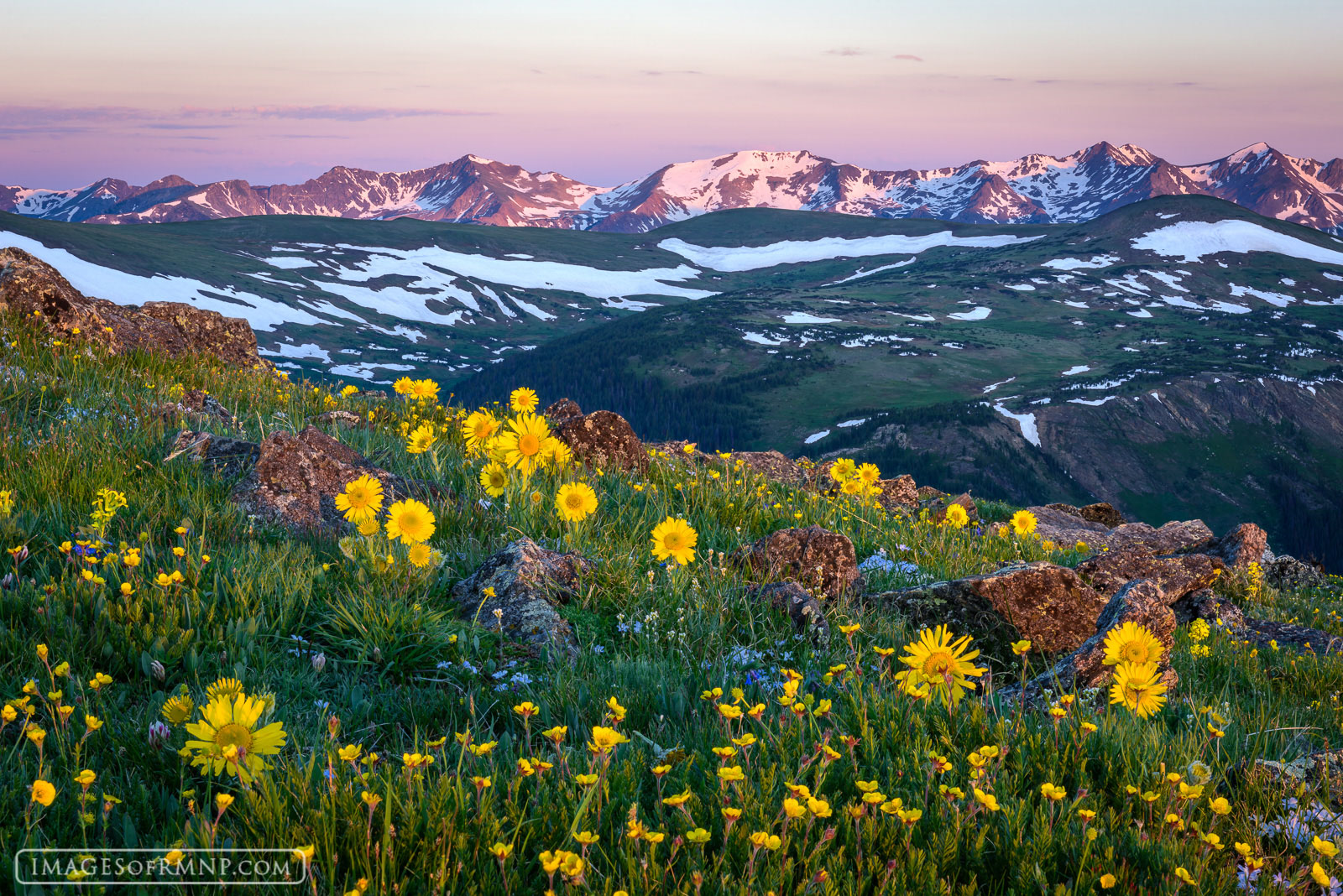 2015, Colorado, USA, alpine sunflower, america, flower, july, mountain, nature, never summer range, old man of the mountain, phlox, plant, rmnp, rocky, rocky mountain national park, rydbergia, summer,, photo