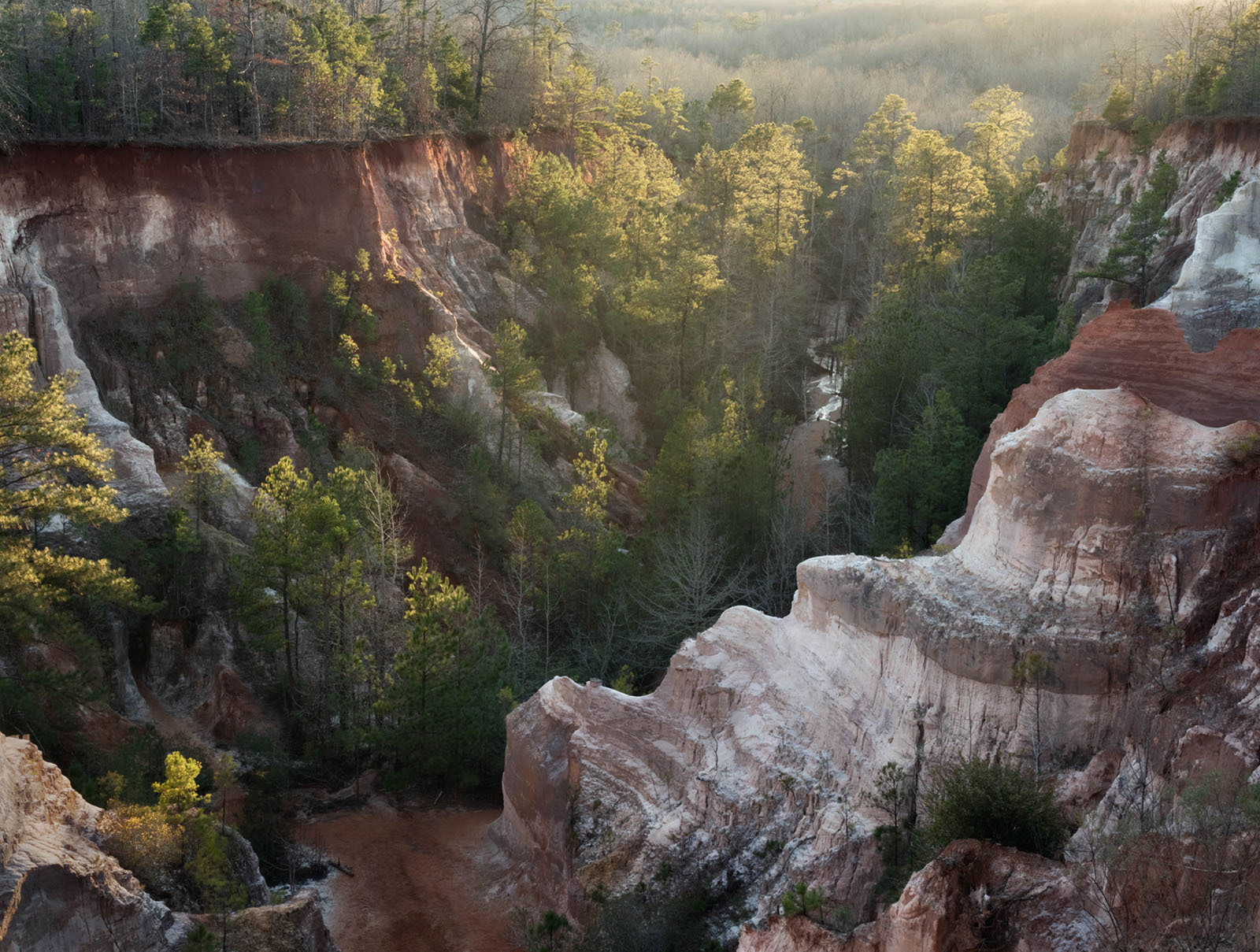 canyon, red rocks, trees