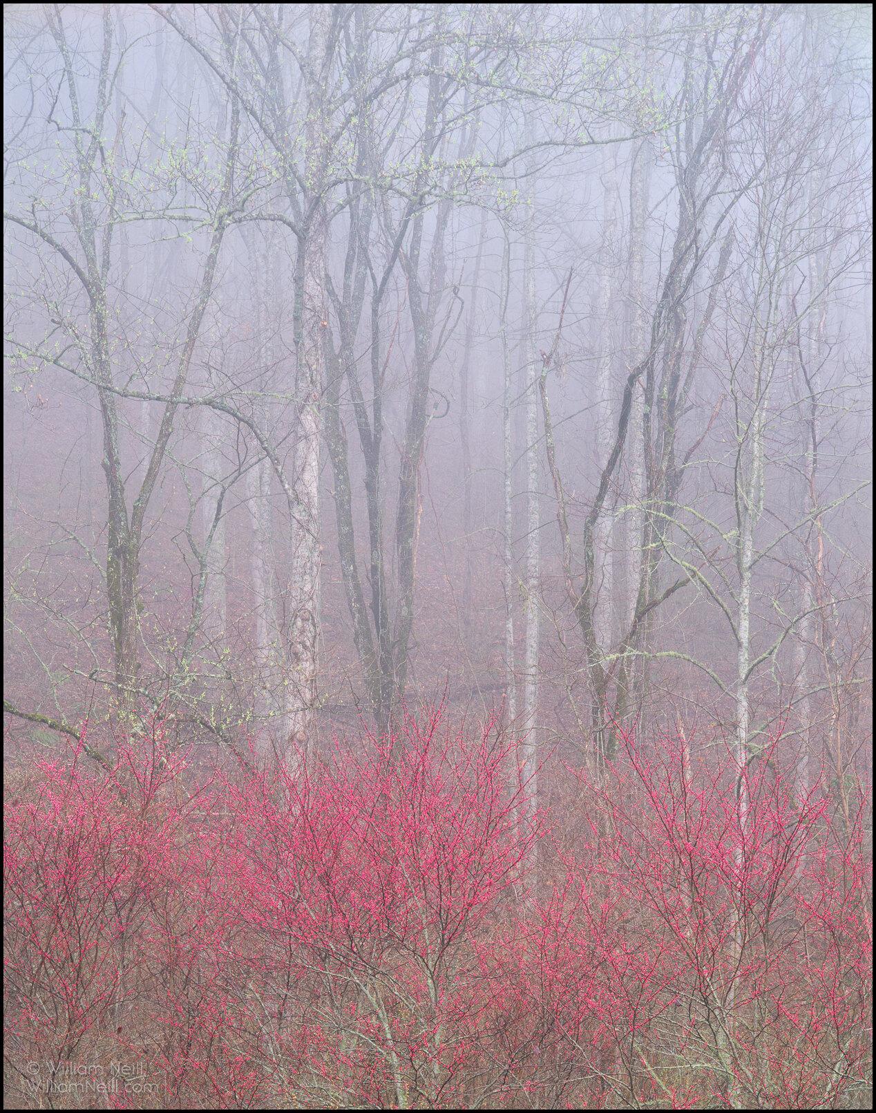 William Neill Photography, photo