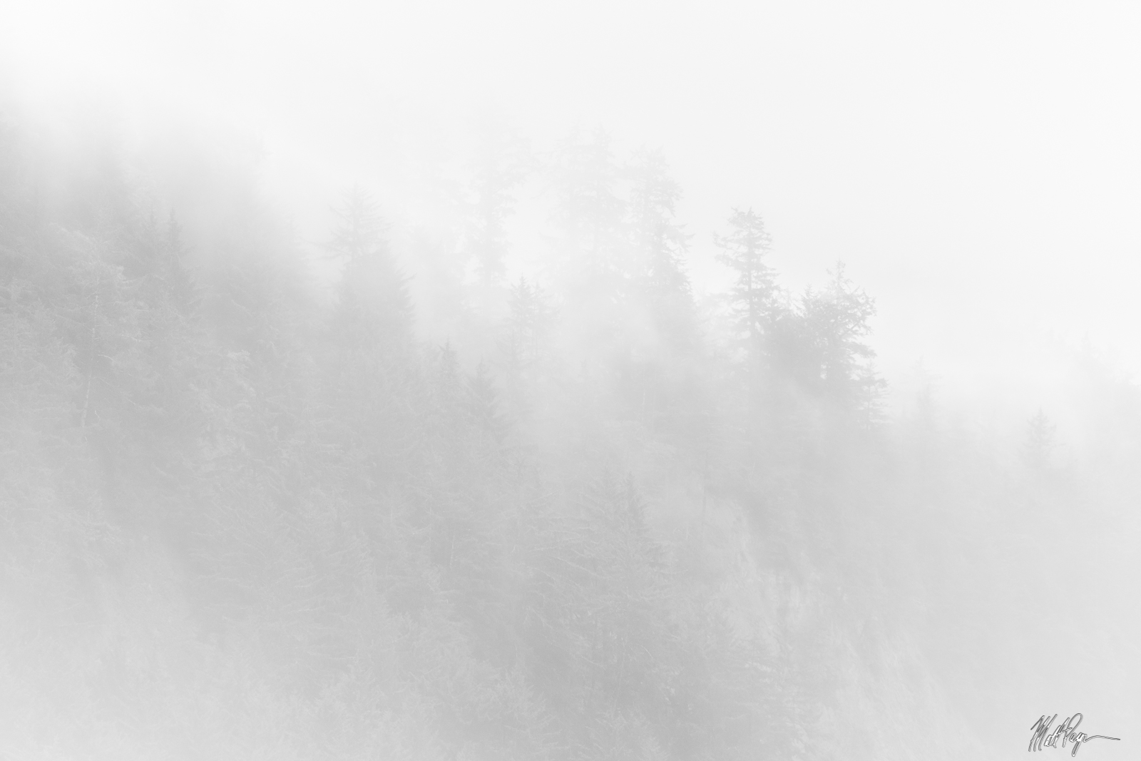 After a night of rain, fog lingers in the Redwood trees of the California Coast. Photo © copyright by Matt Payne.