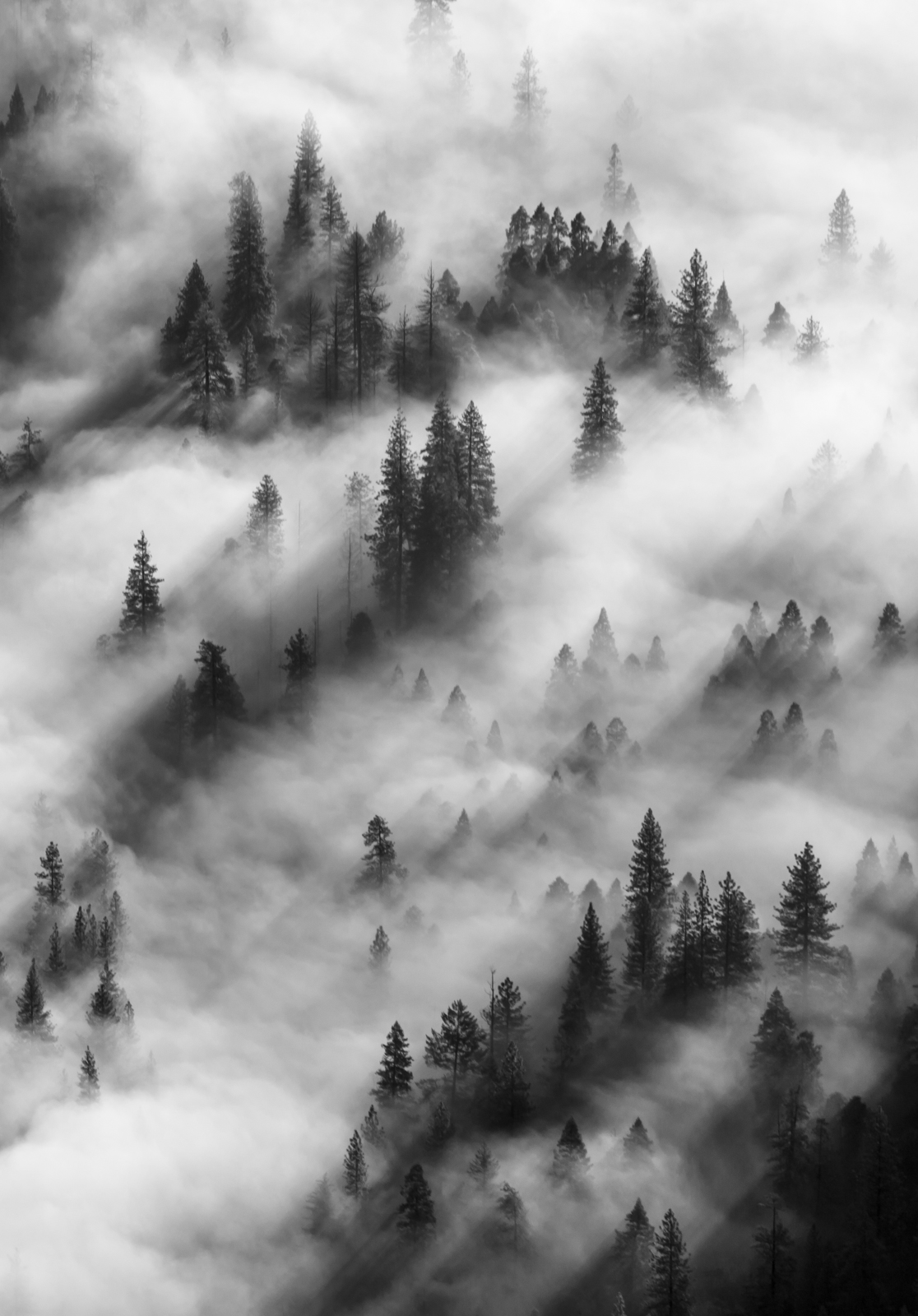 California, Landscape, National Park, Trees, USA, Yosemite, beautiful, clouds, forest, light, mountain, national, natural, nature, outdoor, outdoors, park, pine, scenic, tourism, travel, tree, valley,, photo