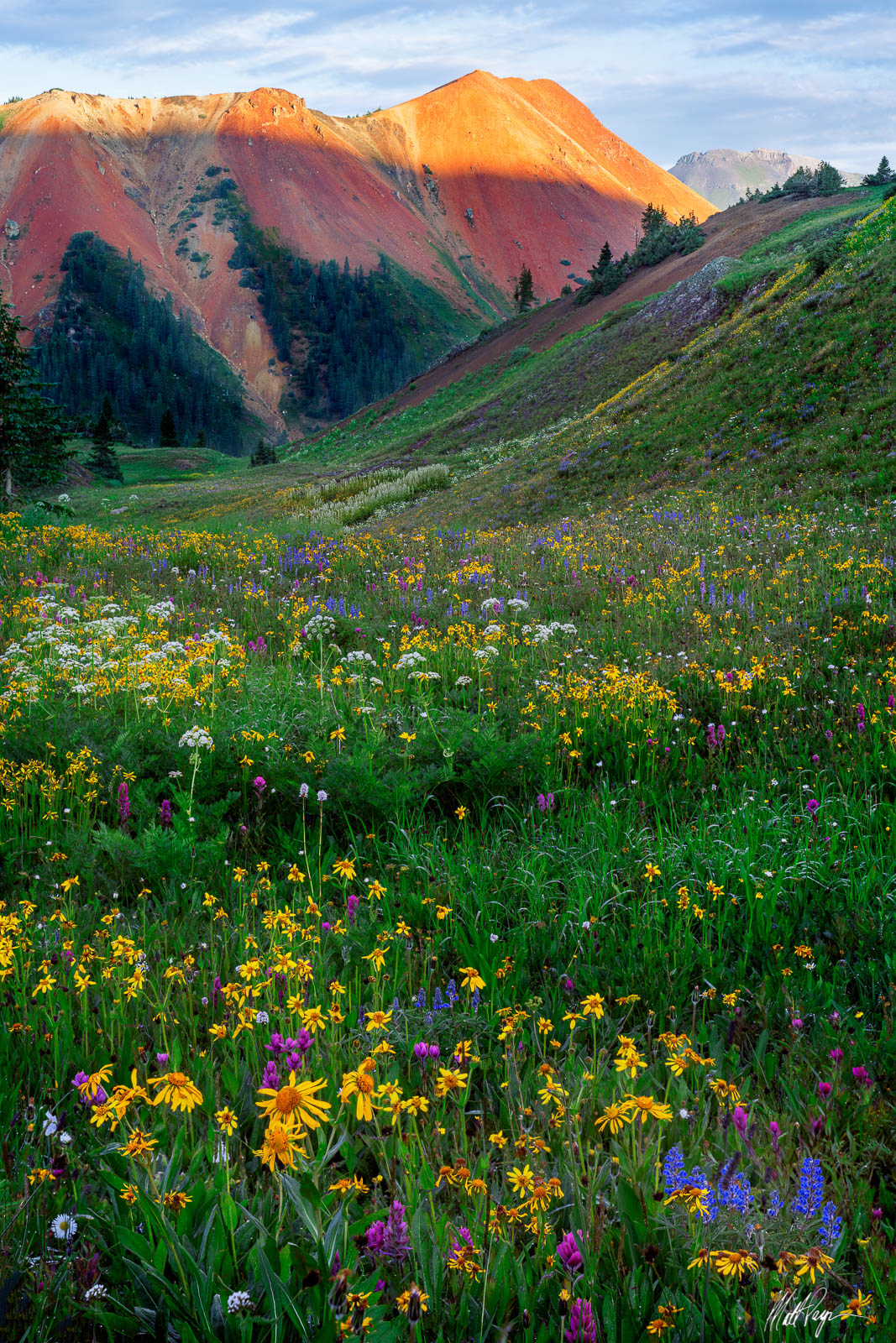 While hiking around one of my favorite areas in the San Juan Mountains of Colorado, I discovered this incredible meadow of wildflowers...