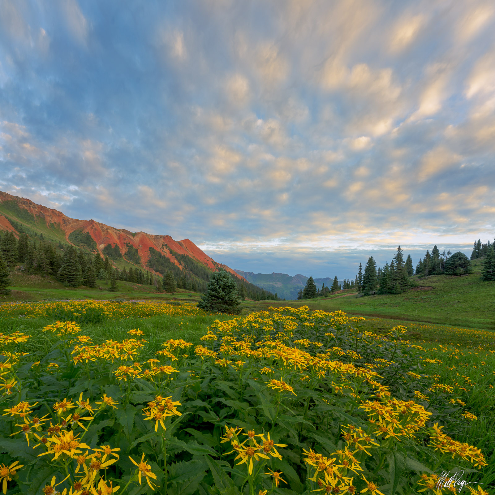 What I liked about this particular composition was how the yellow wildflowers in the foreground mirrored the clouds in the sky...