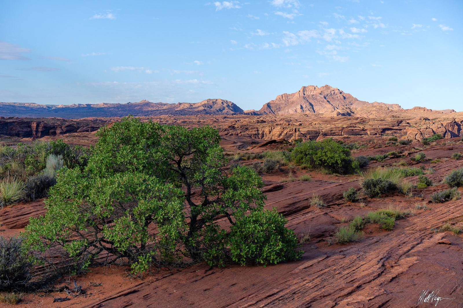 Scrub oak and other hearty foliage grow in the middle of the desert of Arizona, showing that the desert can provide life and...