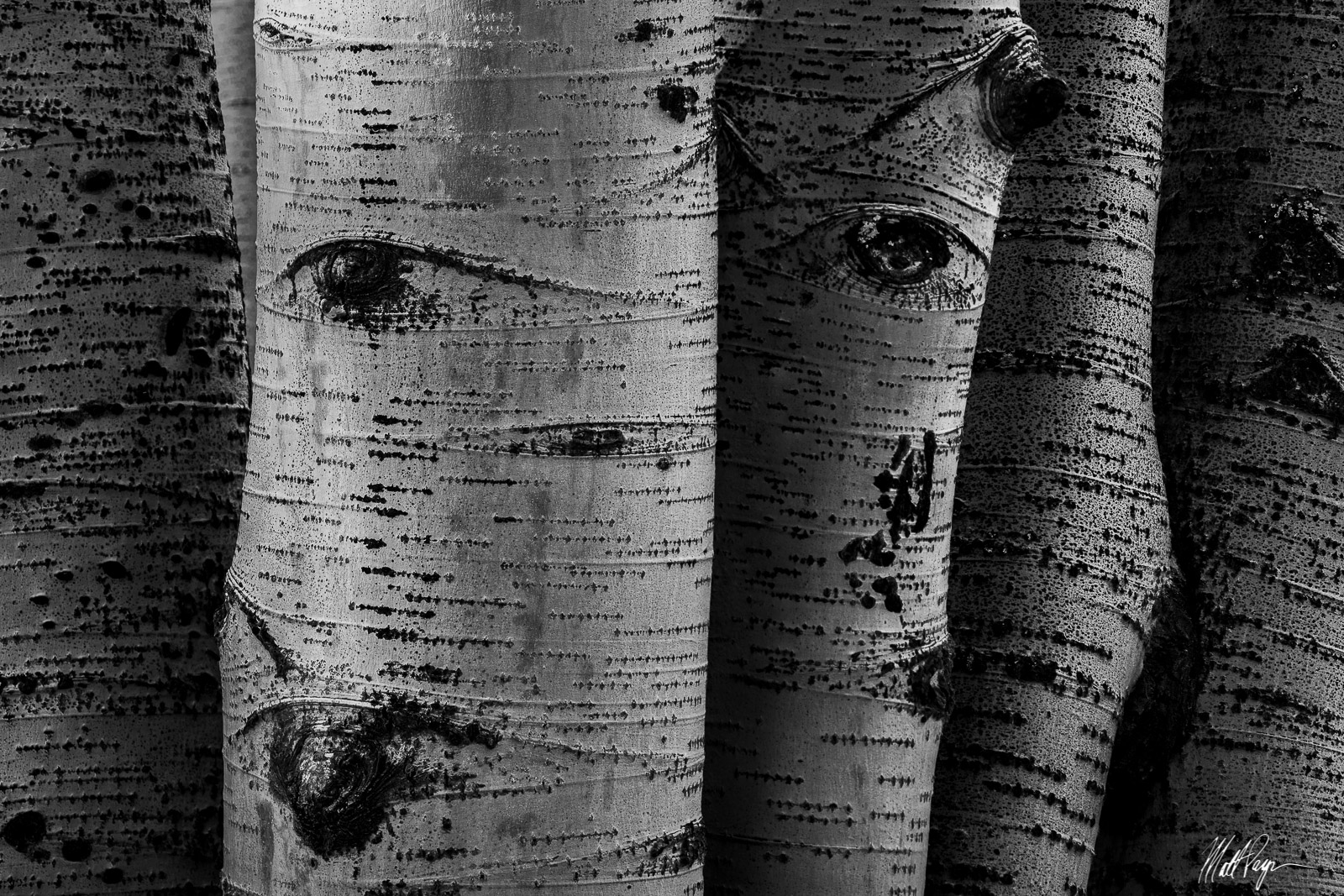 abstract, Aspen Trees, Autumn, Black and White, Colorado, Eyes, Fall, Forest, Intimate Landscape, Landscape, photo